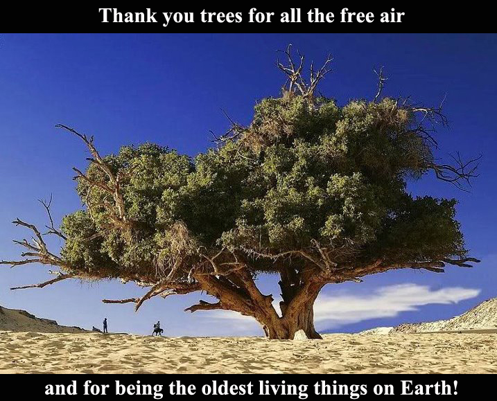 thank you trees, trees are our friends, oldest living things on earth